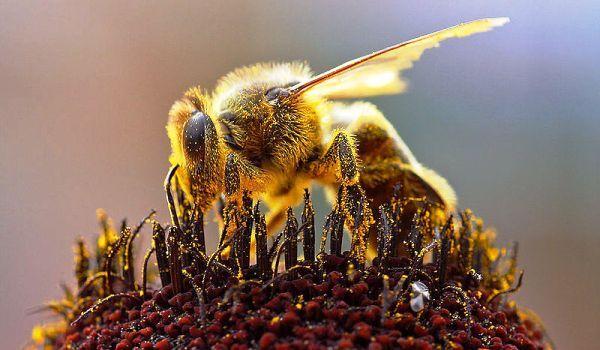 Tratamente naturiste cu produse de la albine