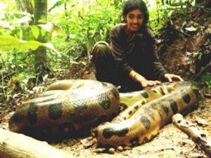 anaconda amazonian