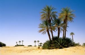 oaza In Salah