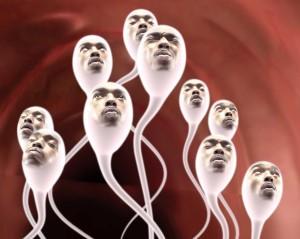 preoductia de spermatozoizi