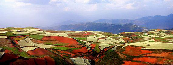 dealuri multicolore