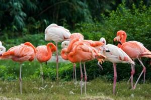 flamingo James