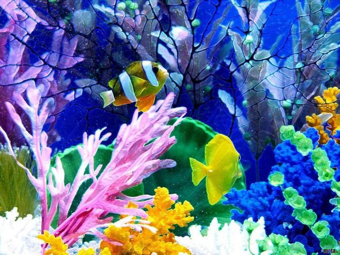 Aquaworld Aquarium4