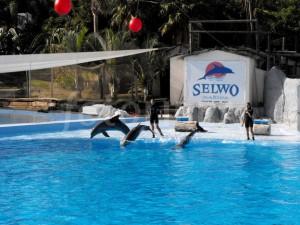 Delfini in Malaga