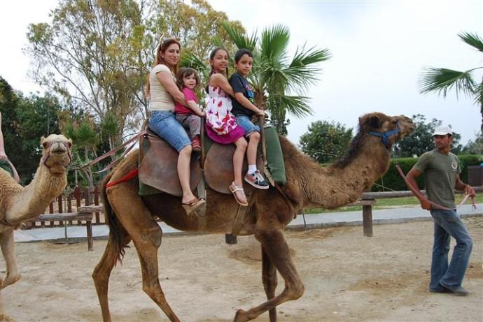 camel park cipru